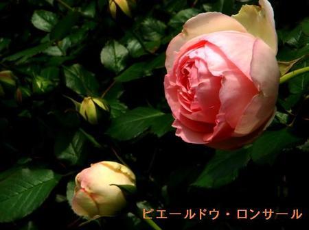 Hukuibara2_4