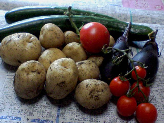 野菜を収穫しました
