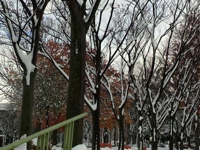 わくわくする雪景色!