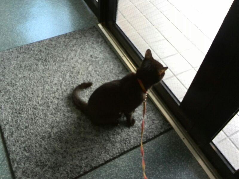 ジヒョン 動物病院で招き猫