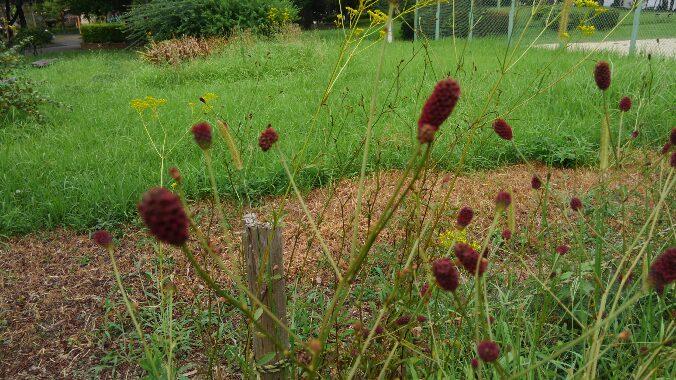 健康診断の結果と秋の花