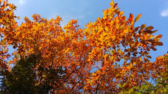 大高緑地の秋