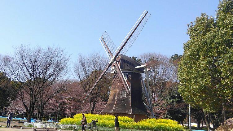 名城公園でお花見