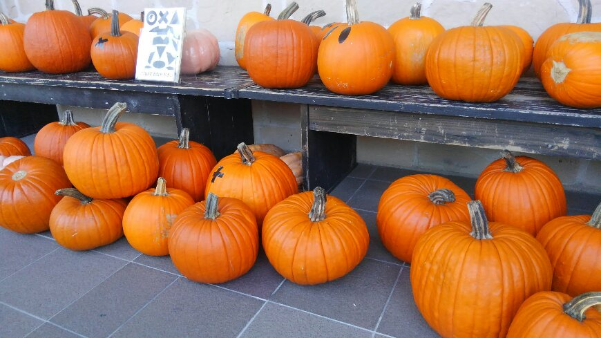 フォックスフェイスとかぼちゃ