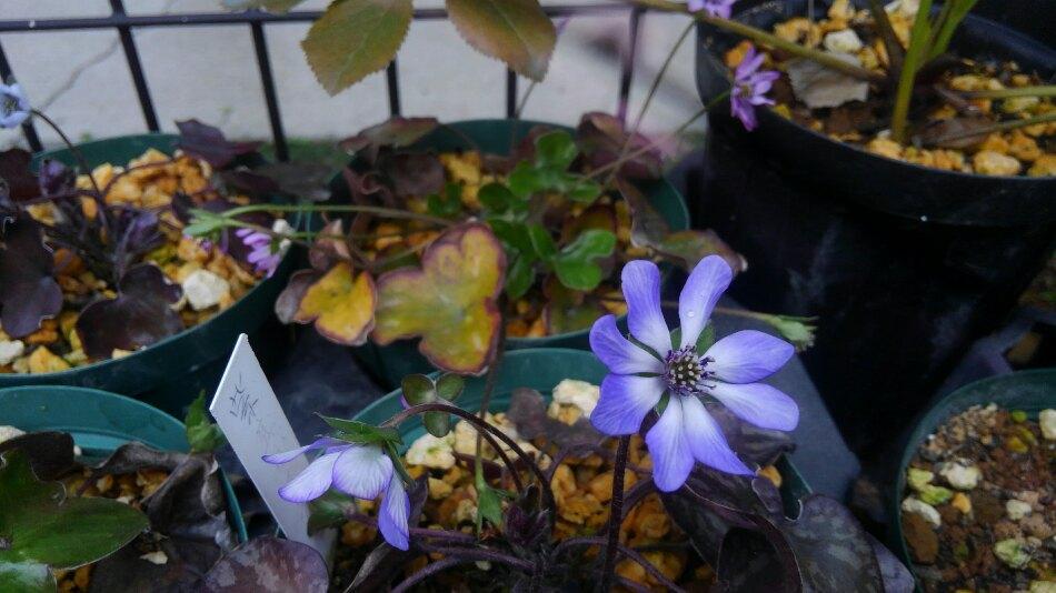 春の花がいっぱい!
