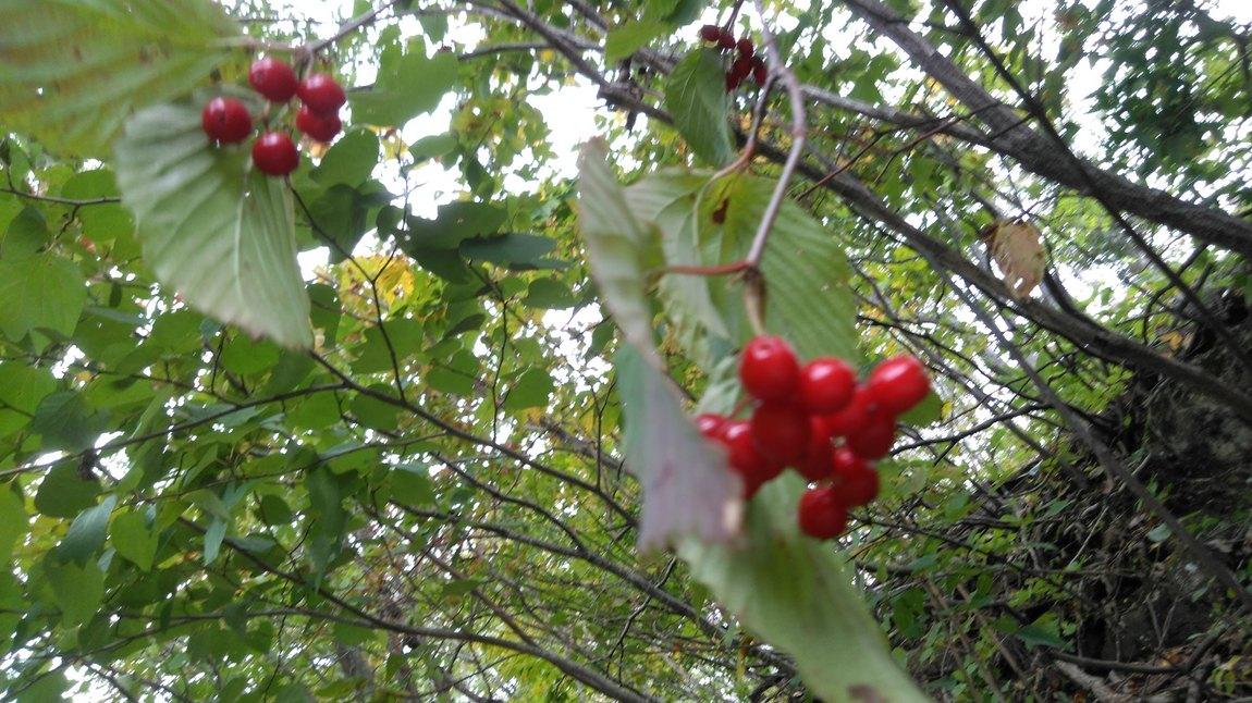 秋は木の実