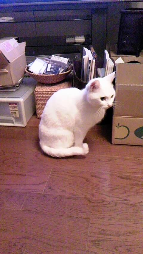 猫の小雪ちゃん