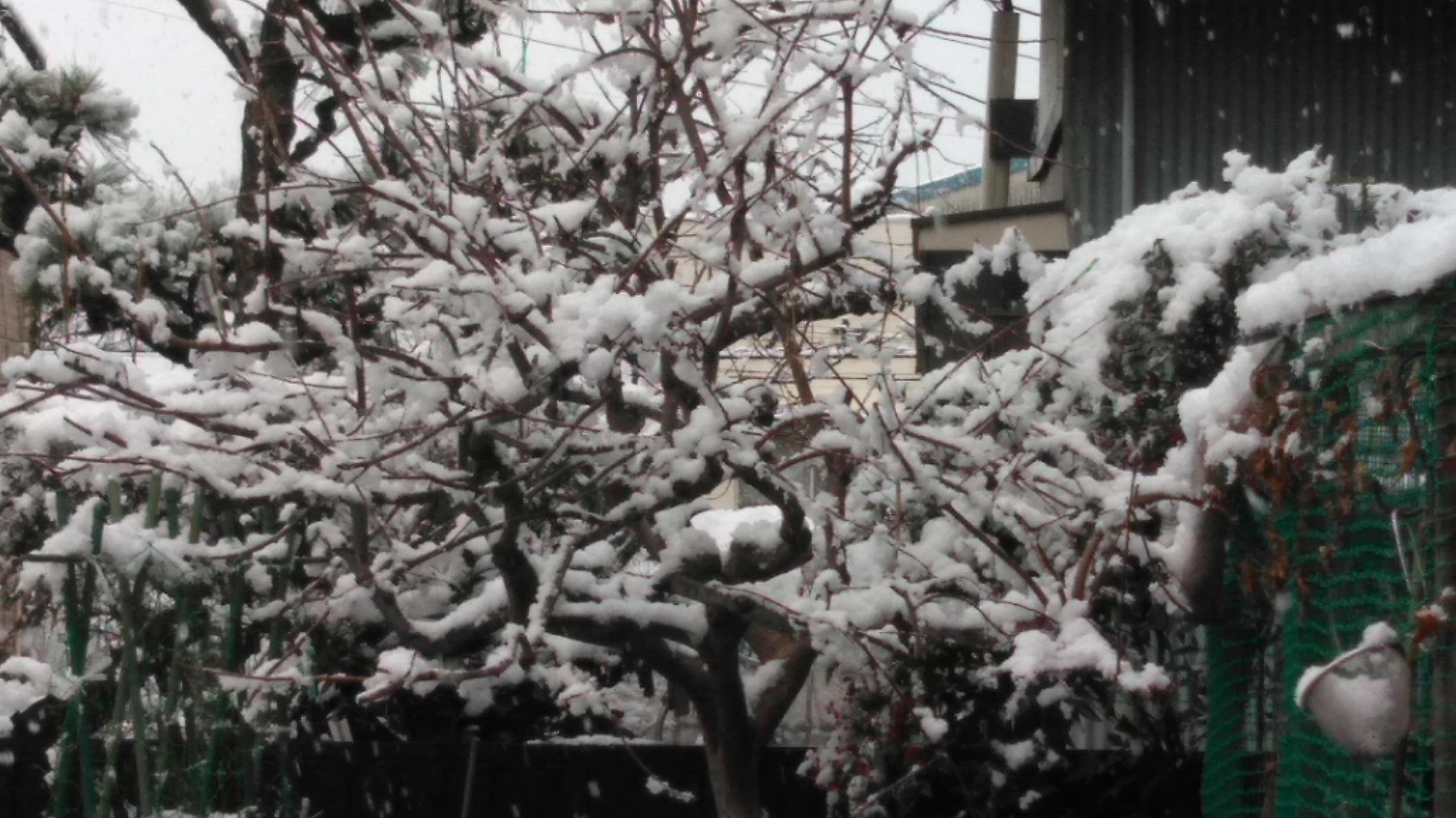 名古屋にも初雪