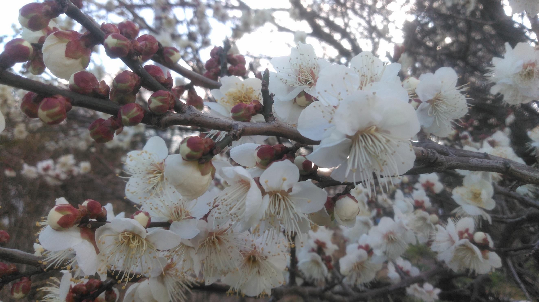一雨ごとに近づく春!