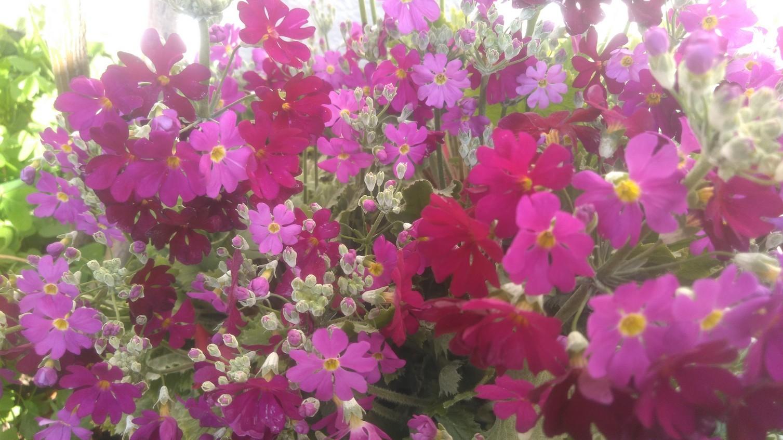 次々に花が咲いてきました\(^o^)/